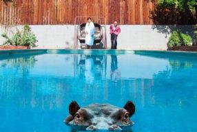 REVIEW: Sparks – 'Hippopotamus' (BMG)